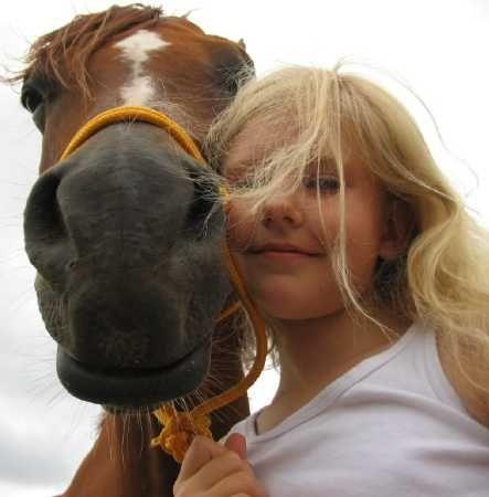 Stallion - Farasha Arabians