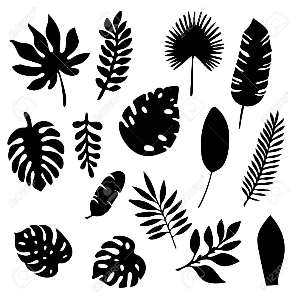 Palm Leaves Silhouettes Set Isolated On White Background Tropical Leaf Silhouette Tropical Leaves Illustration Leaf Stencil