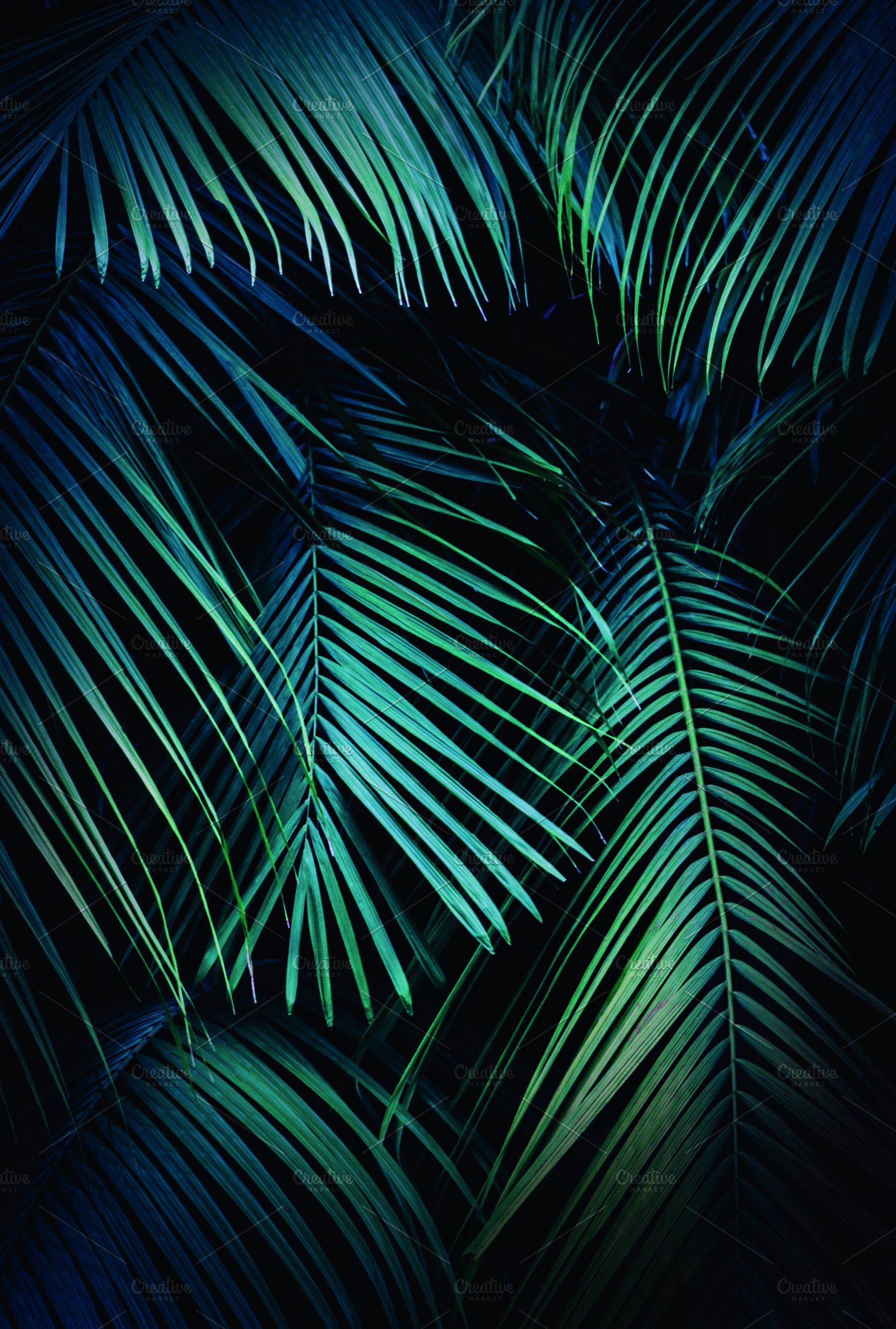 Tropical Palm Leaves Background Leaf Background Tropical Background Palm Leaves It'll will look like this: tropical palm leaves background leaf