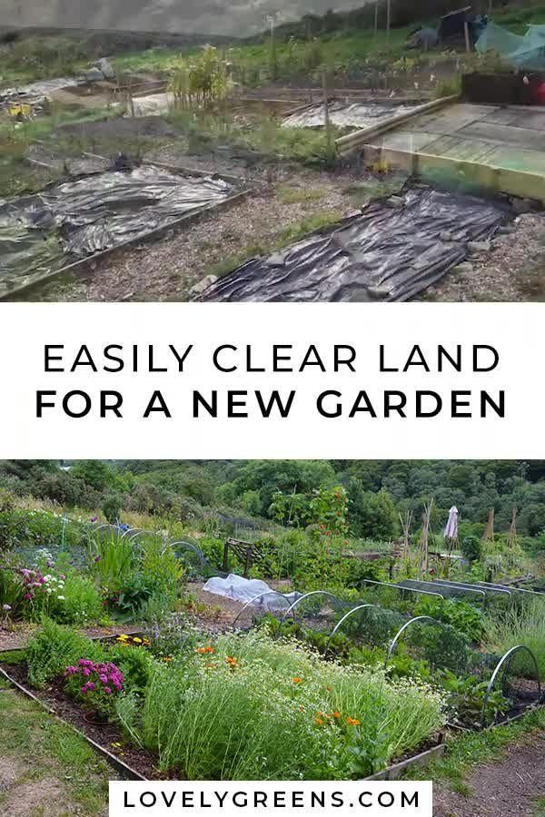 Photo of How to use black plastic to kill weeds and clear land