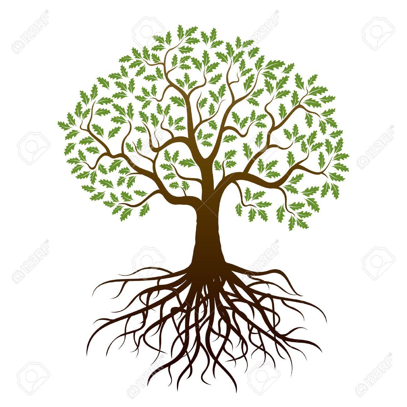 Oak Tree And Roots Vector Illustration Oak Tree Drawings Tree Illustration Oak Tree Pictures