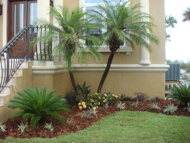 Palm Tree Landscape Design Ideas Modern For Small Front Yards