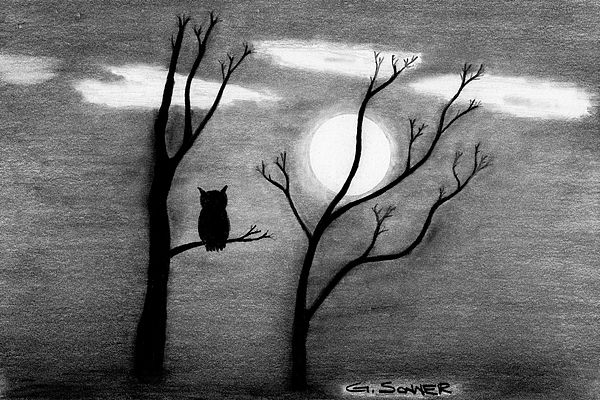 Night owl - A graphite pencil drawing of an owl perched in ...