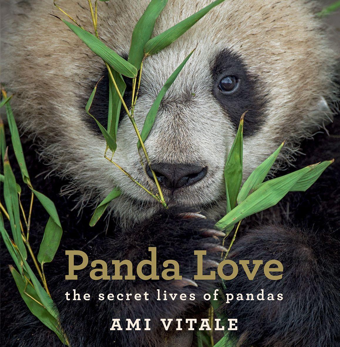 Panda Love The Secret Lives Of Pandas Panda Love Secret Life