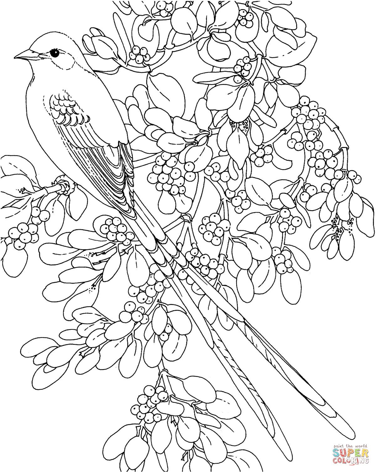oklahoma scissor tailed flycatcher and mistletoe flower coloring