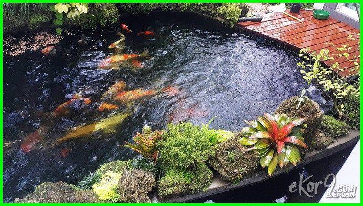 Kolam Ikan Koi yang Baik dan Benar Kolam ikan, Kolam