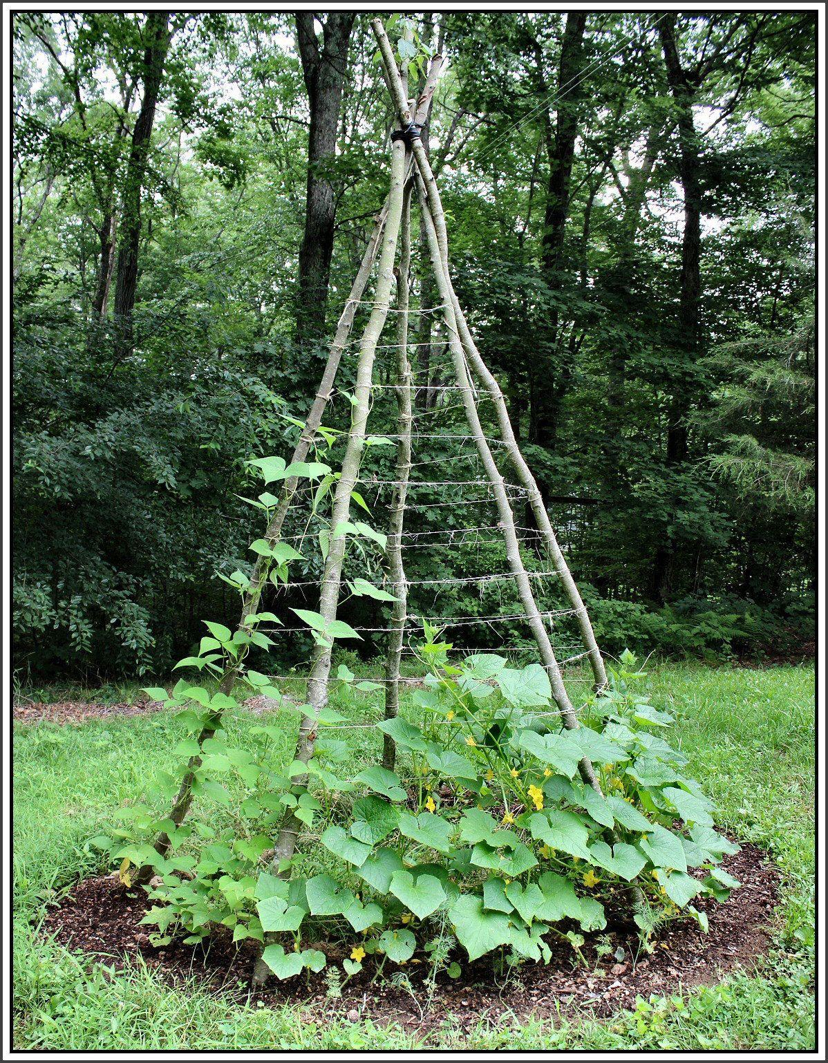 Vertikaler Anbau von Gurken und Gurken #veggiegardens