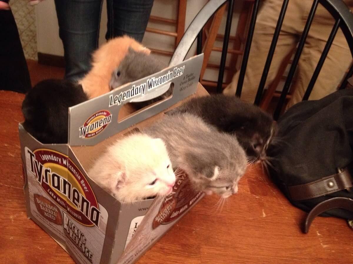 箱に入った猫達 24|ねこLatte+