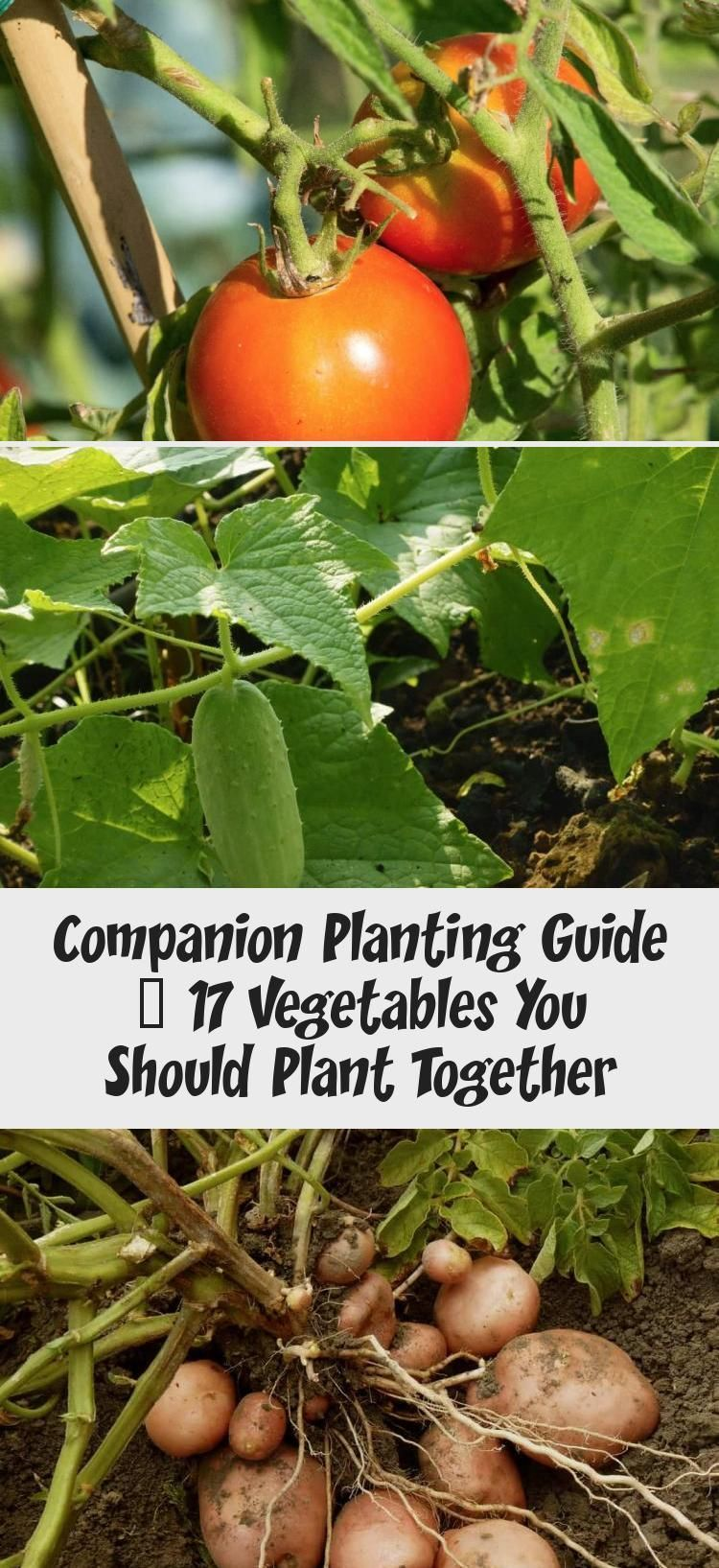 d45331d134ef49d8ca9055e1f4c814a7 - The Vegetable Gardener's Guide To Permaculture