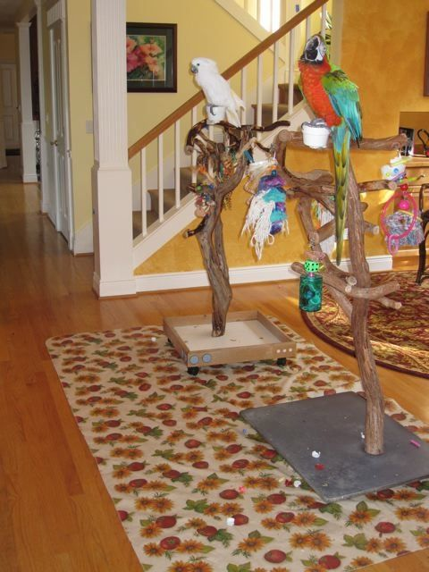 Use Vinyl Tablecloth from dollar store for under bird play stands for easy clean up #parrot #tips