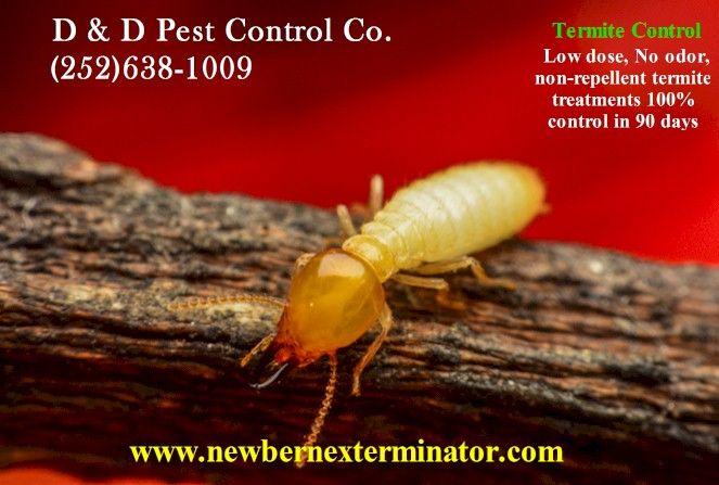 Termite Treatments Inspections For New Bern Nc 28560 Www Newbernexterminator Com Termite Treatment Termite Control Termites