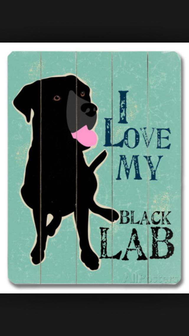 Pin by kristina on labradors Black lab, Black labs, Lab dogs