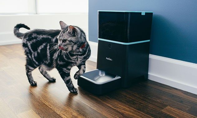 Cat and automatic feeder
