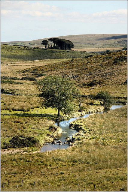Dartmoor, Two Bridges, England ~ temperate grassland ~ Photo: Capt' Gorgeous, via Flickr.  September 2010