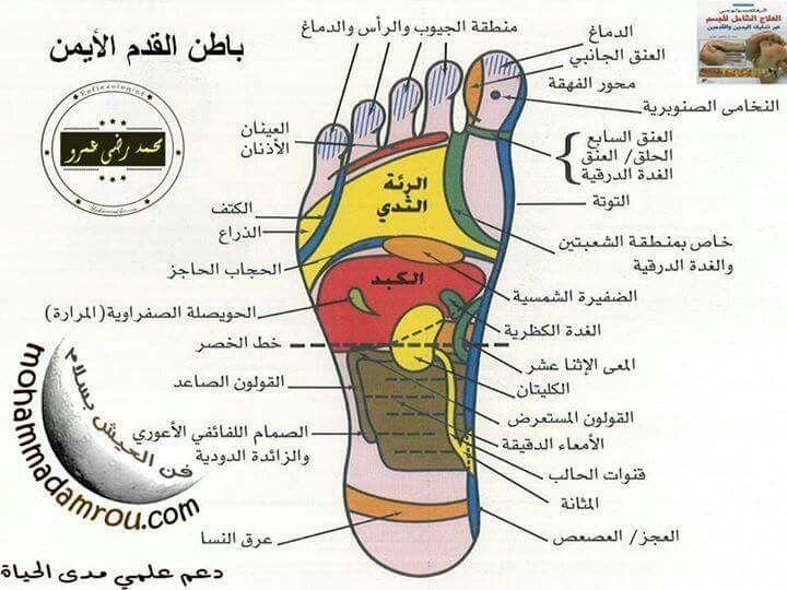 باطن القدم اليمني Alter