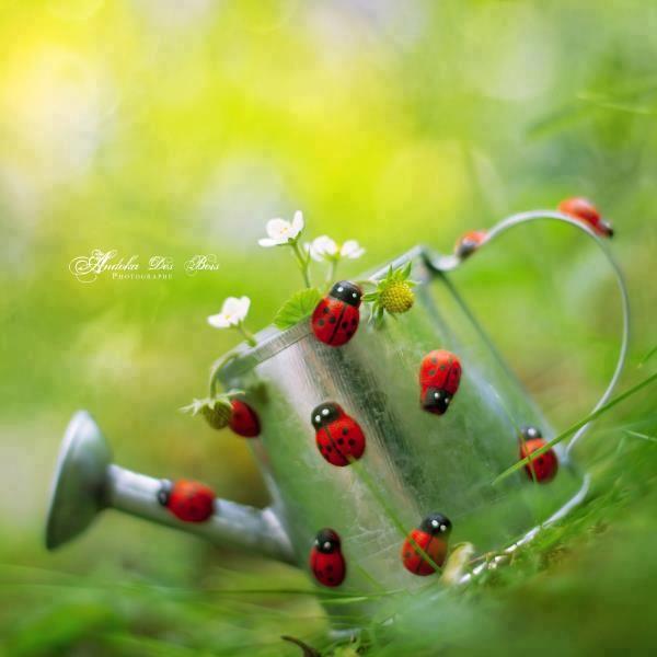 ladybug coccinelles mais je pr f re en anglais picnic party festa picnic coccinelle. Black Bedroom Furniture Sets. Home Design Ideas