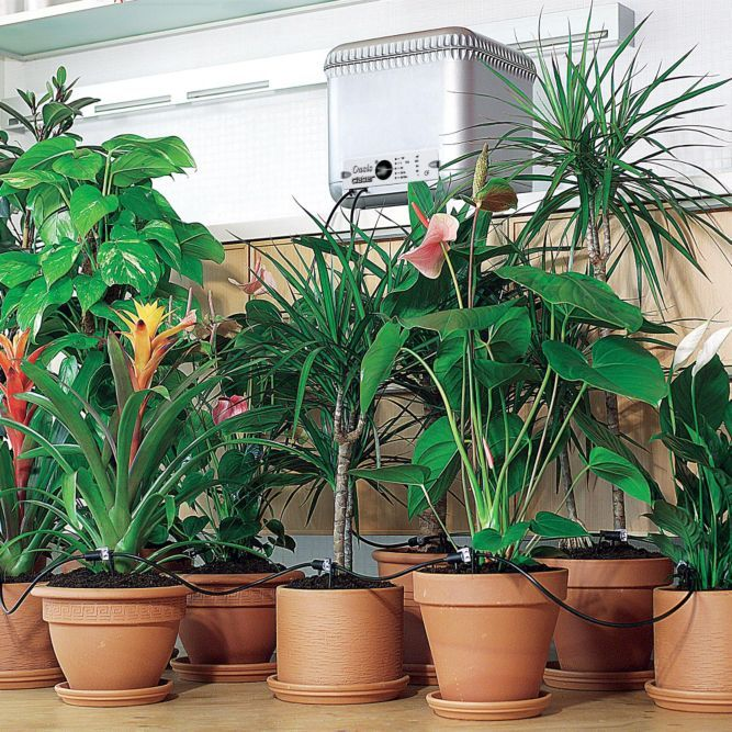 Oasis Watering System Automatic Plant Watering Indoor Watering Machine Solutions Indoor Watering Plants Indoor Plants