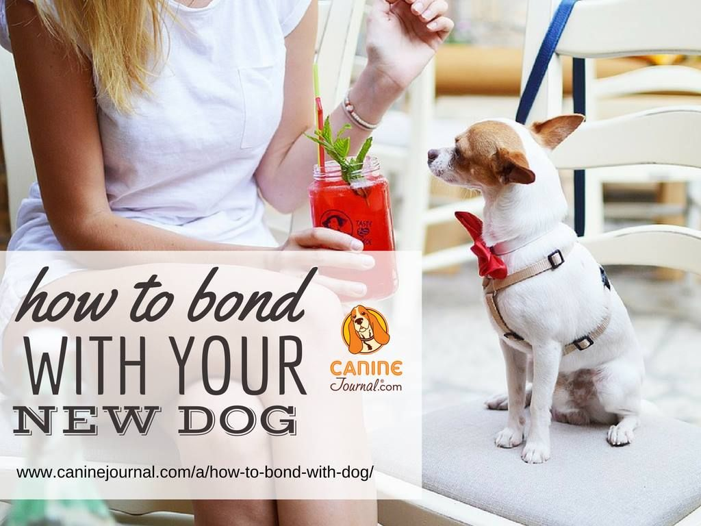 How To Bond With Your Rescue Dog Or New Puppy New puppy