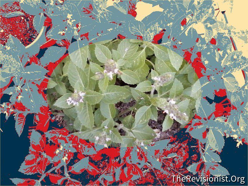 Tulsi (Ocimum sanctum) - Cognitive Enhancer & Properties   Bio