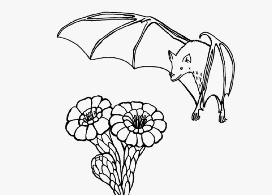 Bats Flying Coloring Page Color Luna Bat Coloring Pages