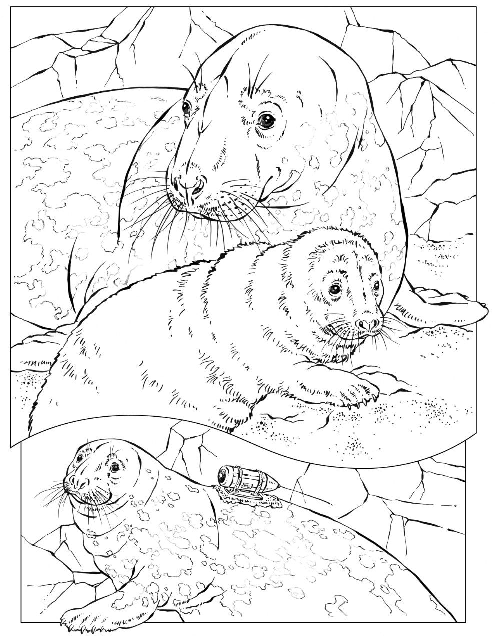 Coloring Book Animals A To I Animal Coloring Pages Shark Coloring Pages Coloring Pages
