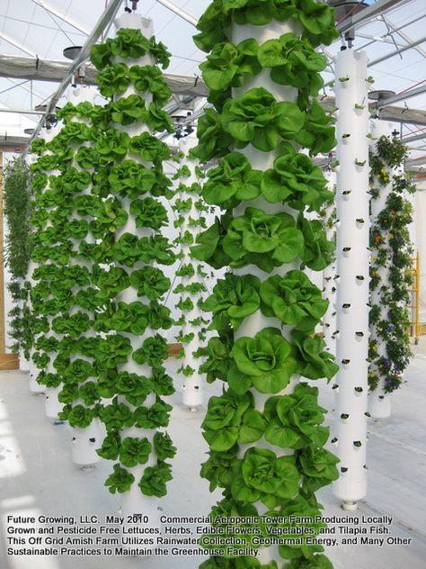 Vertical Towers Vertical Vegetable Gardens Indoor 640 x 480