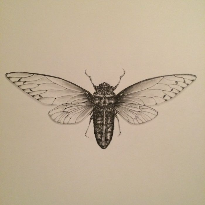 Cicada Drawing Art Print