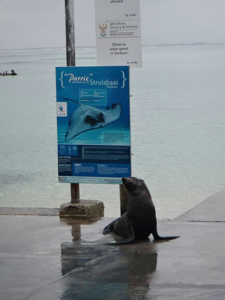 Parries friendly seal