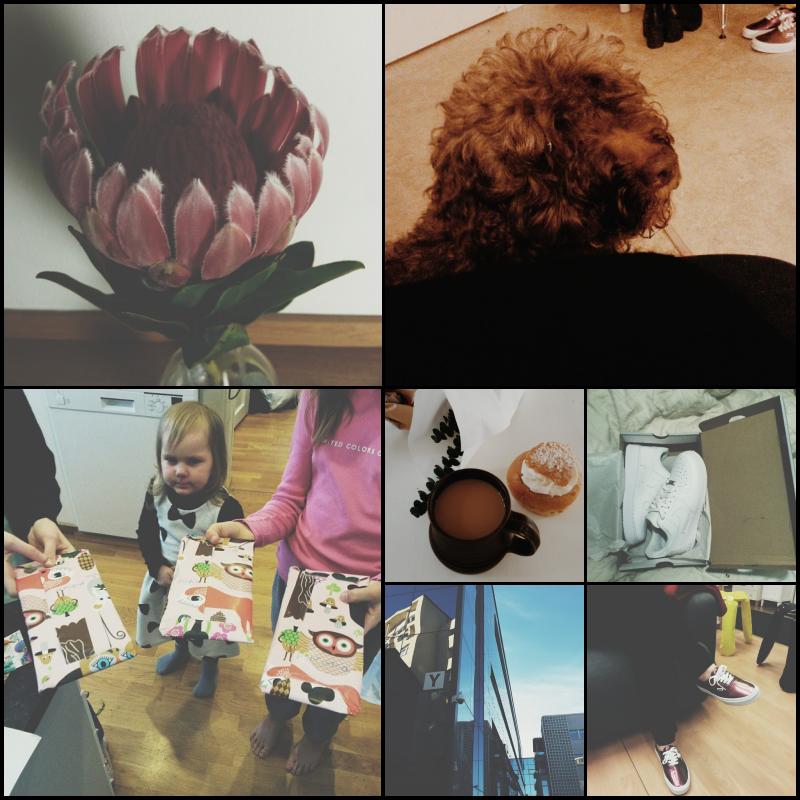 Instagrammeja, viikon kuulumisia ja miehen mystinen katoaminen