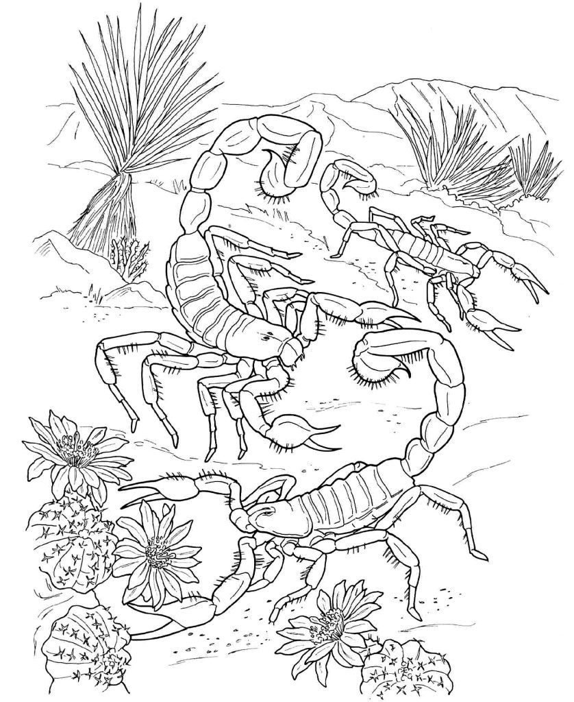 Free Printable Scorpion Coloring Pages For Kids  Insect coloring