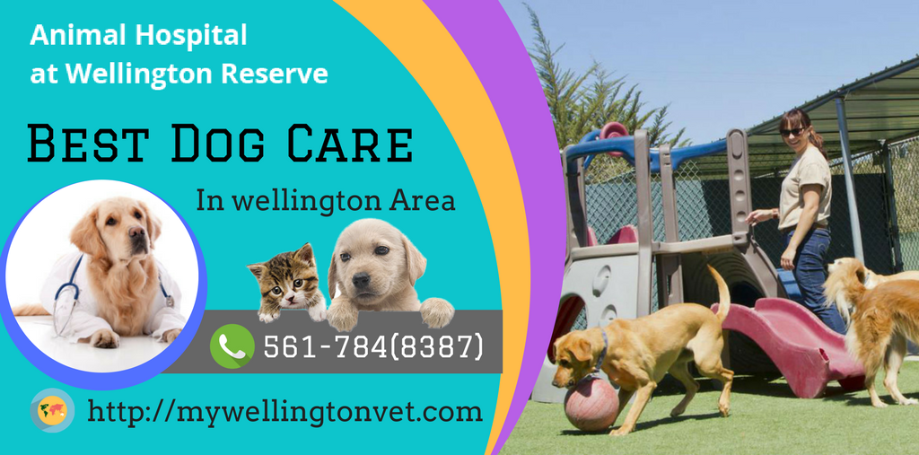 Dog Grooming Wellington Animal hospital, Dog care, Pet