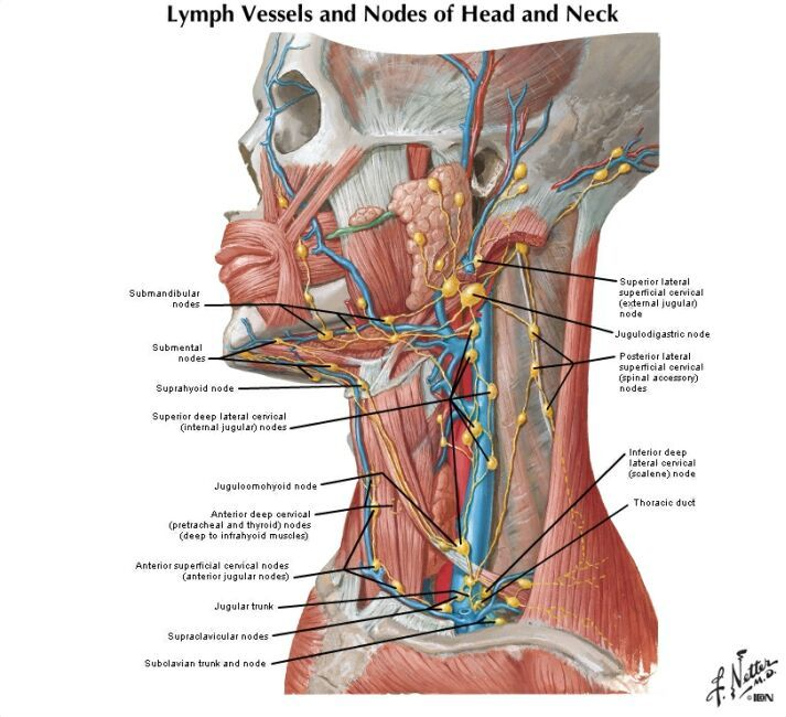 Lymph Node Locations Health Best Sites Can T Lose