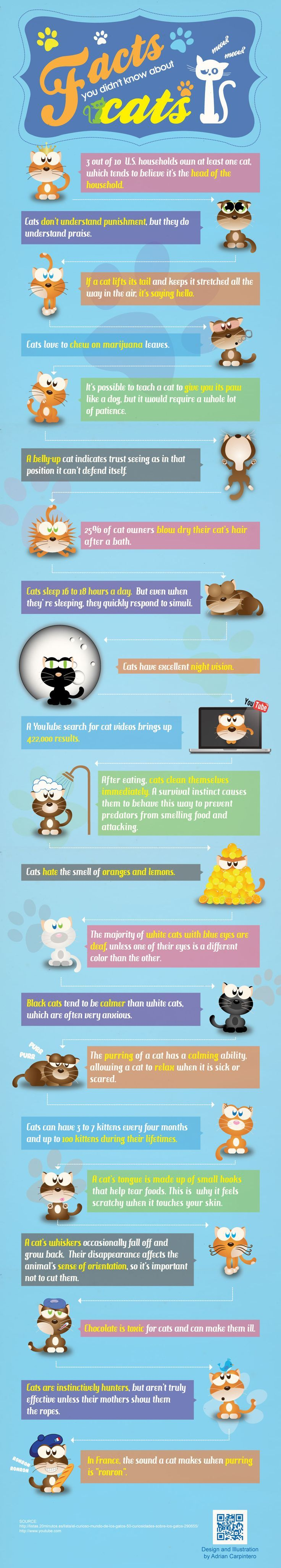 """""""Facts about cats"""" Very cute illustration style. Doesn't"""