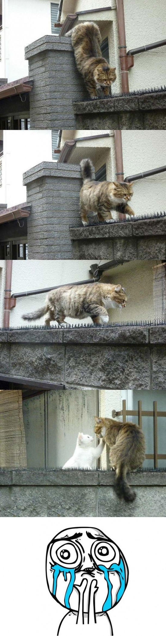 Cute cat visiting his girlfriend in spite of adversity - Imgur