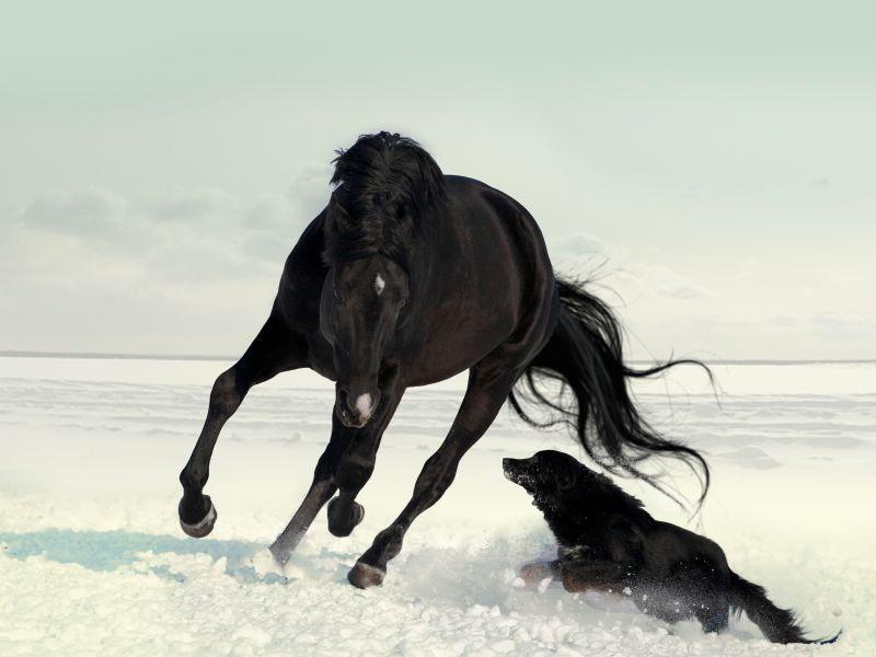 pferd und hund beim schnee galopp horses pinterest. Black Bedroom Furniture Sets. Home Design Ideas