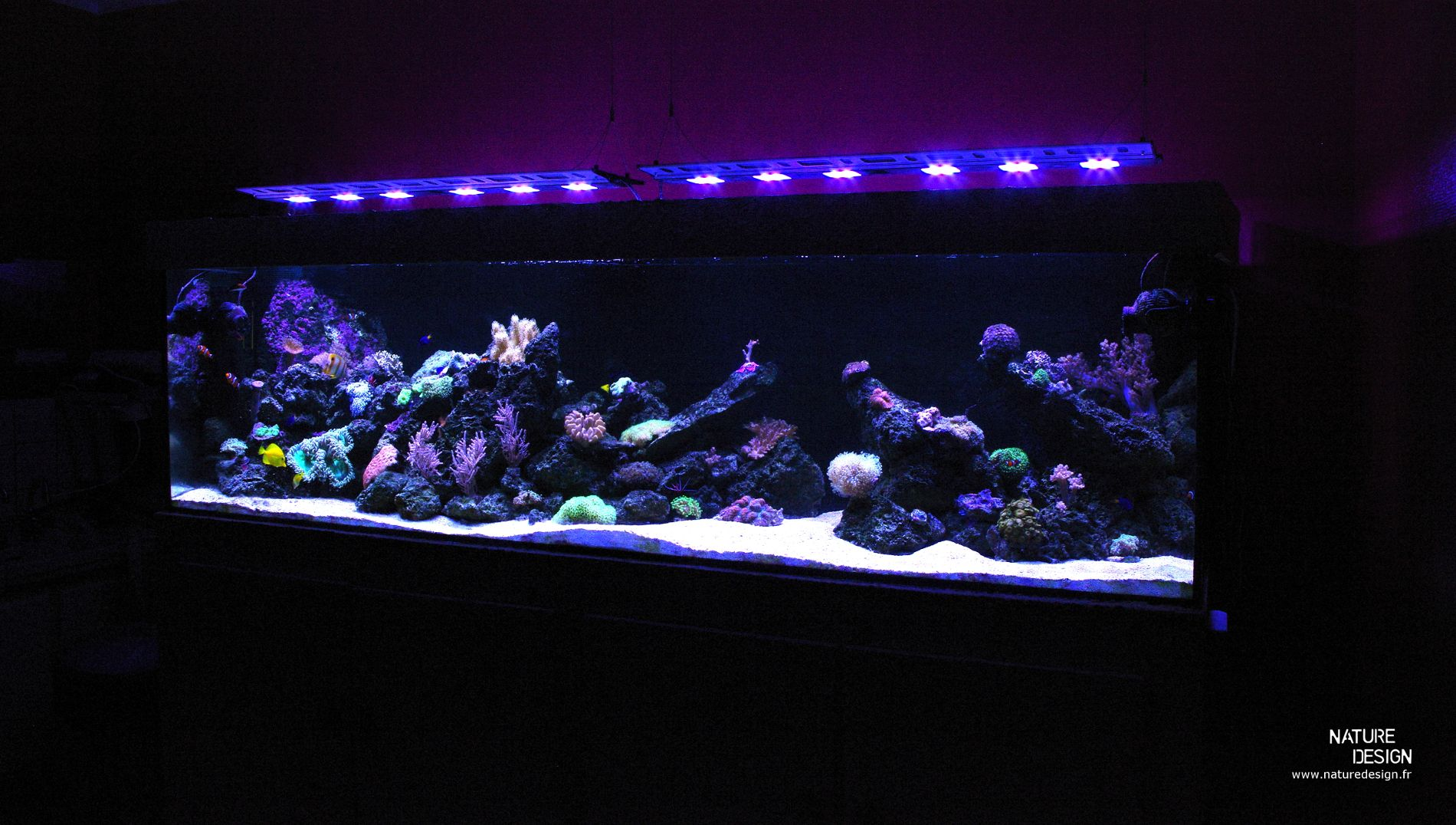 Aquarium Récifal Aquarium Eau De Mer 1200l Aquascaping Recifal