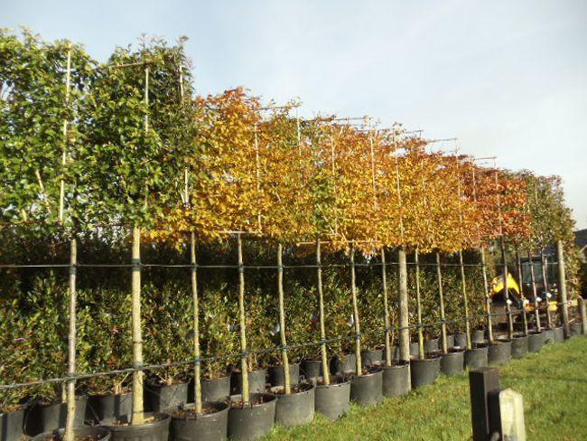 Mature trees and shrubs