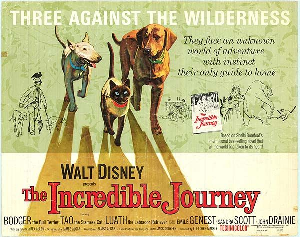 The Incredible Journey disney movie poster | The incredibles, Dog ...