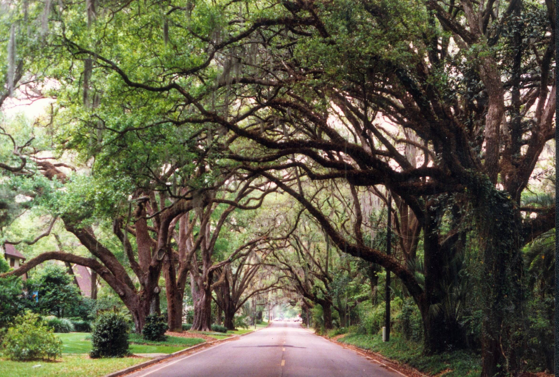 Tree Canopy Ocala Florida Ocala Florida Florida