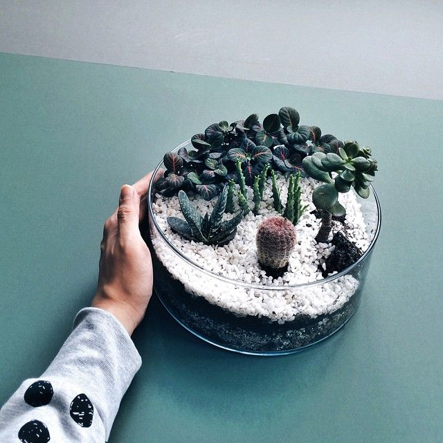 """Fancy a portable garden? #vsco #vscocam #vscogrid #terrarium #ig #igsg #igers #instagramsg instagood #greenfingers"""