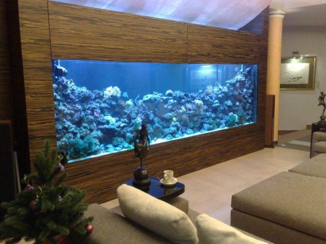 Aquarium eingebaut schrank wohnzimmer blaue beleuchtung aquarium traum pinterest eingebaut - Aquarium wohnzimmer ...