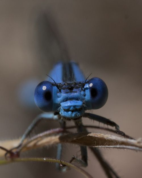 I'm ready for my close-up! #dragonfly