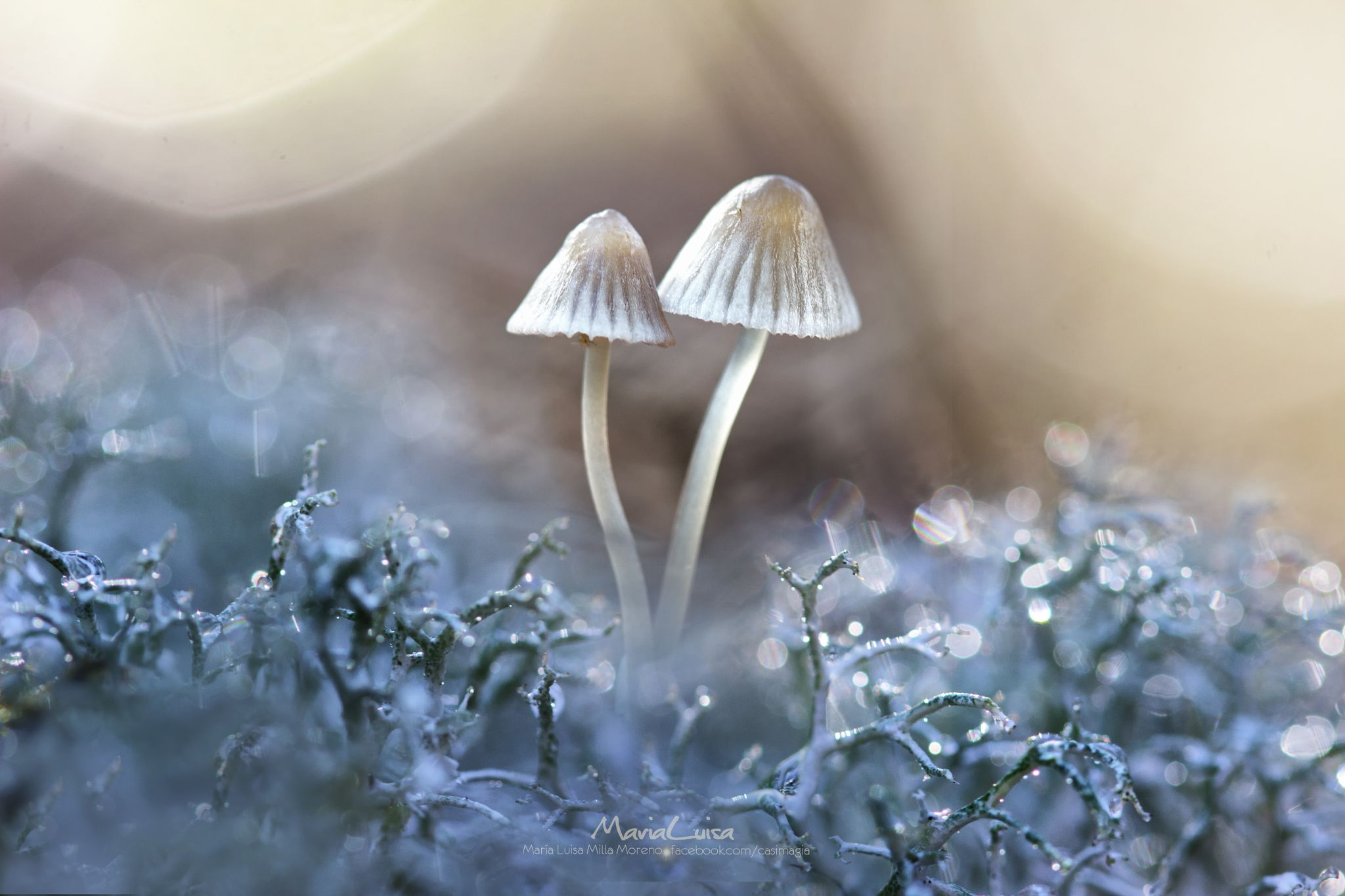 wild mushrooms and lichens