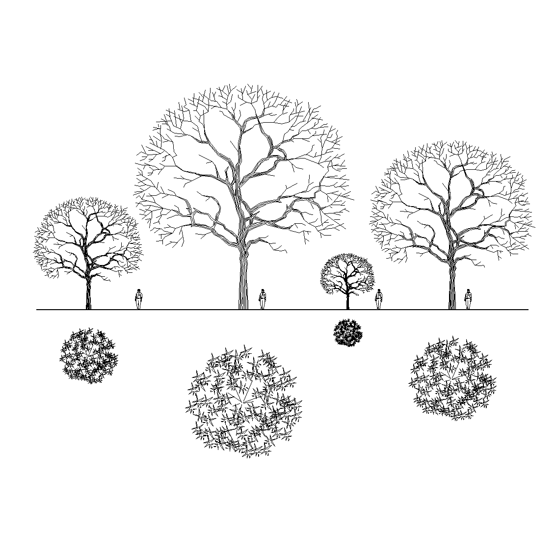 Elevation And Plan Of Trees : Download this collection of revit tree families d