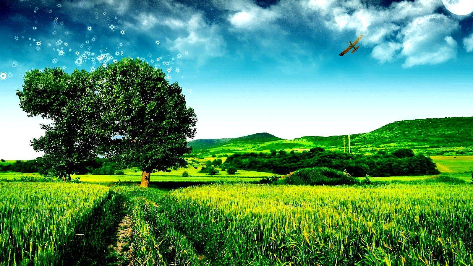Nature Tree Go Green HD Wallpaper