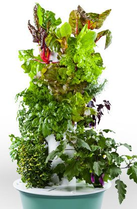 Tower Garden Q By Dr. Mitra Ray