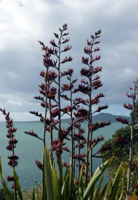 Native New Zealand Flax By Margaret Tooley New Zealand Art New Zealand Flax New Zealand Landscape