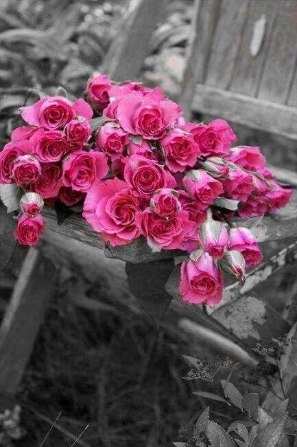 Pin von Bianka auf pink/black | Pinterest | Rose, Rosa und Blumen