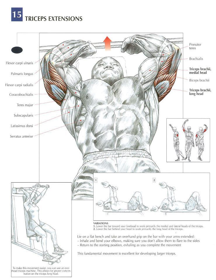 Triceps Extension #workout #gymaholic | Bodybuilding & Fitness ...
