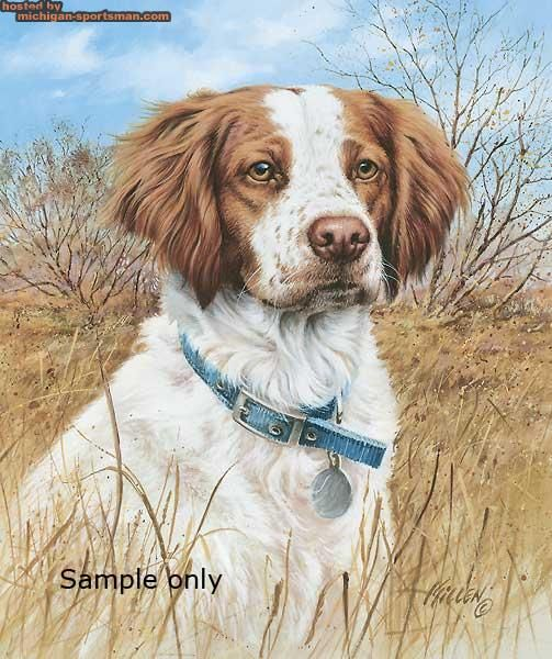 brittany spaniel drawing The Michigan Sportsman Photo